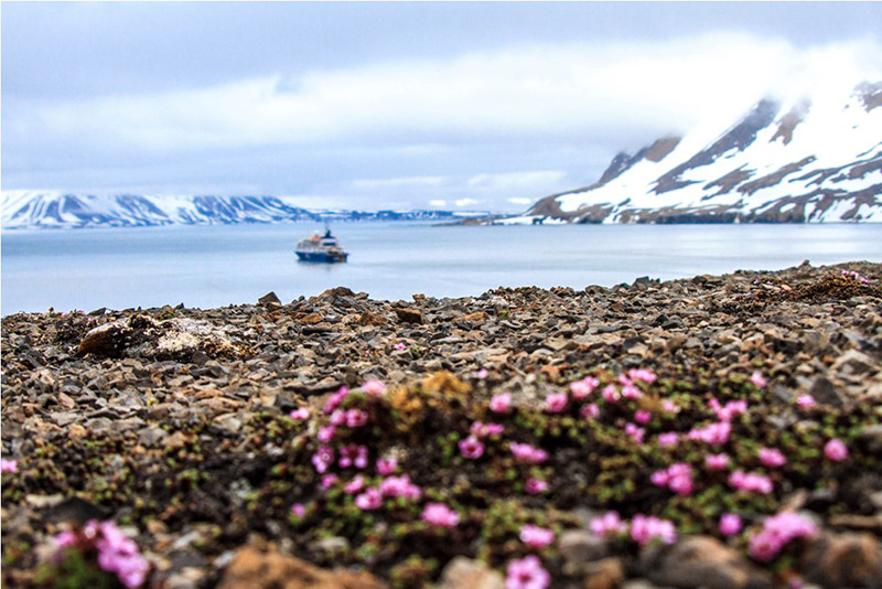Exploring Spitsbergen, the wildlife capital of the Arctic, by small expedition ship gives you more time to explore by land and Zodiac cruiser.