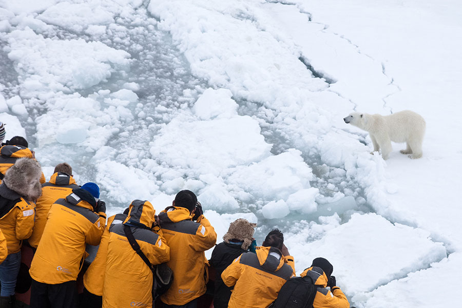 A polar bear spotted from the ship - Photo Credit: Samantha Crimmin