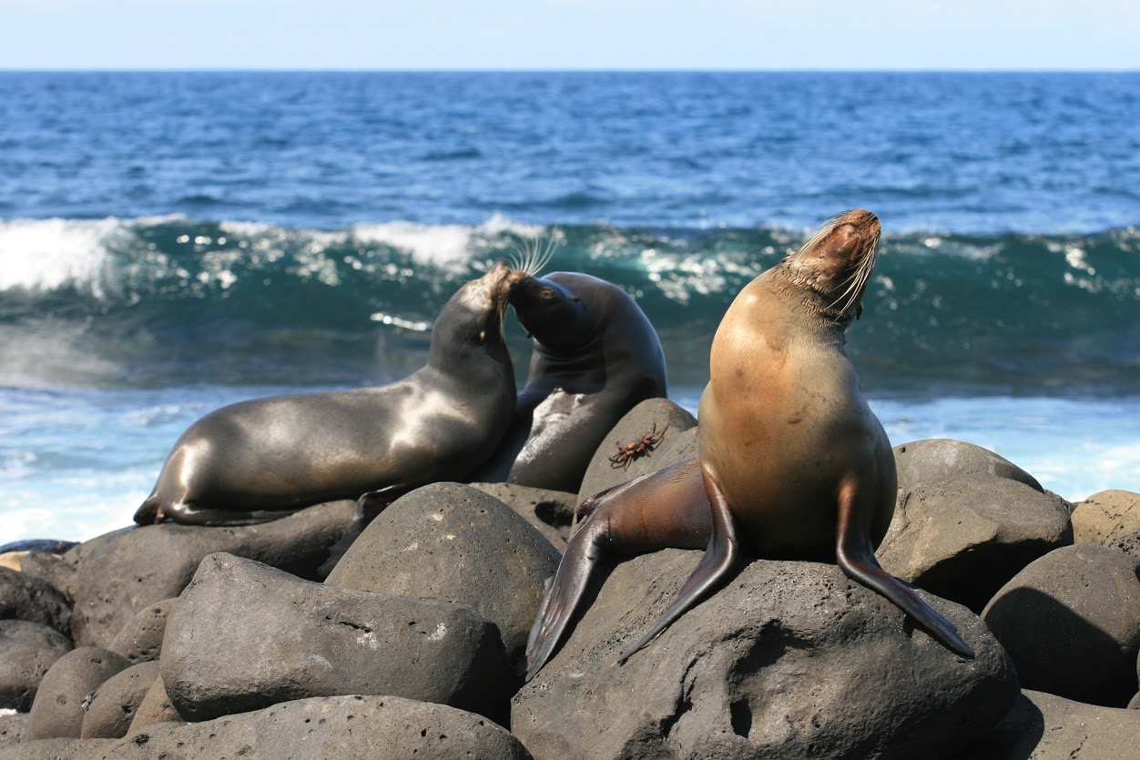 Galapagos sea lions - Photo credit: Ecuador's Ministry of Tourism