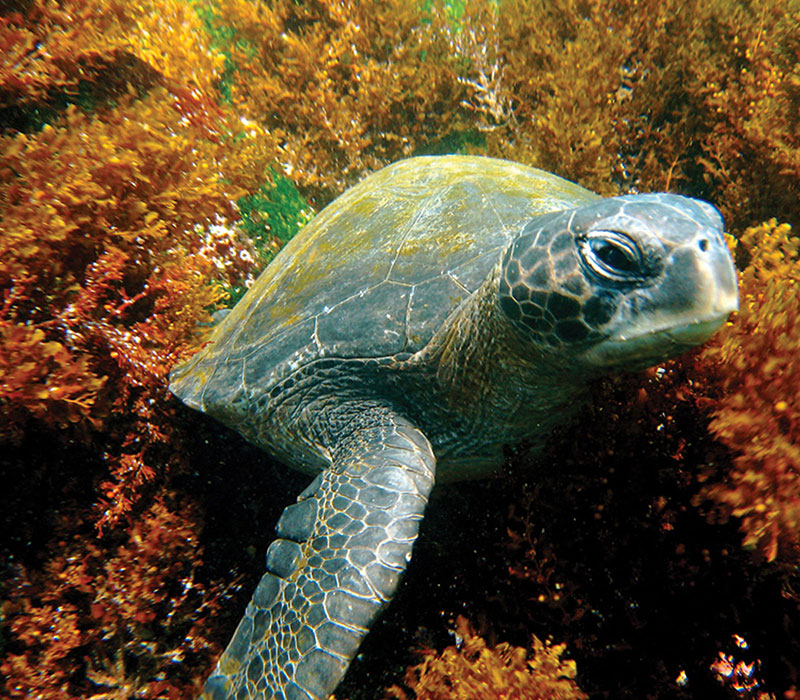 blog_gbig5_turtle.jpg