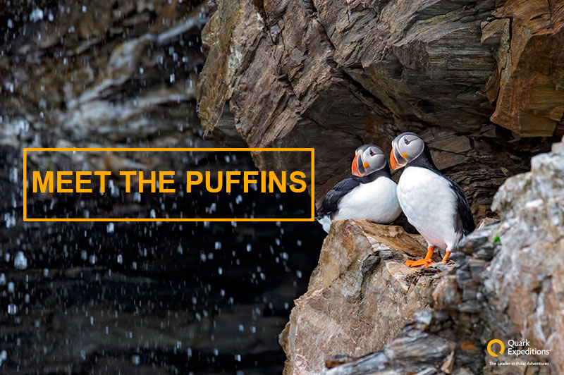 Meet the Puffins