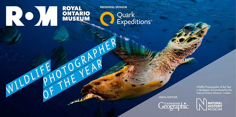 Enter the ROM Wildlife Photographer of the Year contest