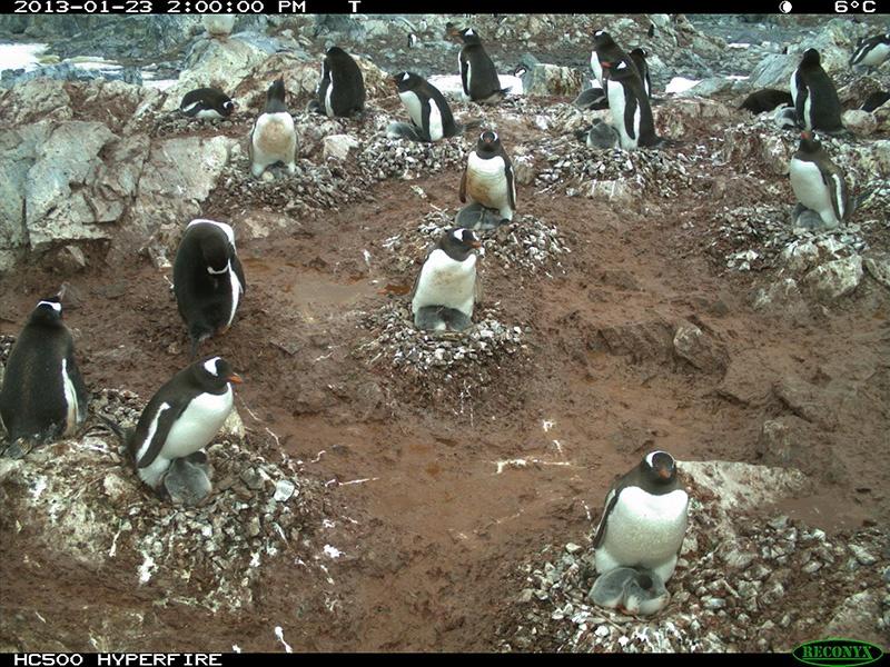 Penguin camera image courtesy of Penguin Lifelines