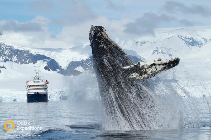 blog_whales_jump