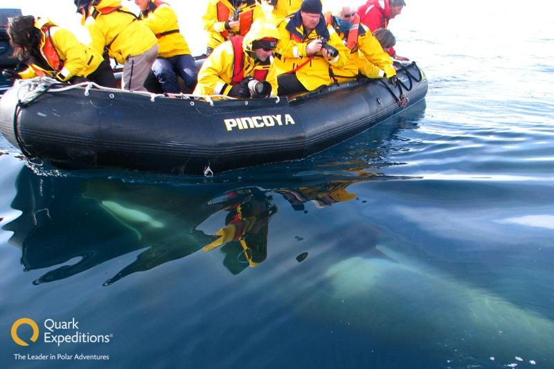 a whale swims under a zodiac