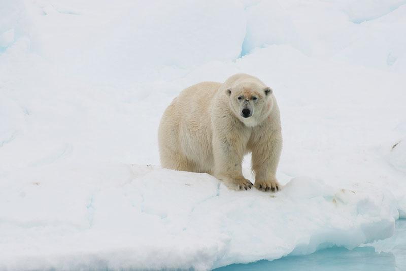 blog_wildlifeexp_bear.jpg
