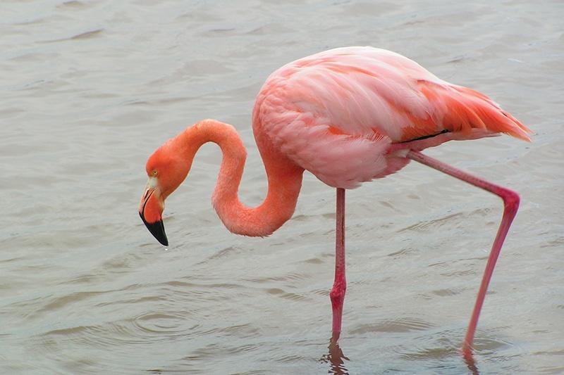 flamingo_-_boli_sanchez.jpg