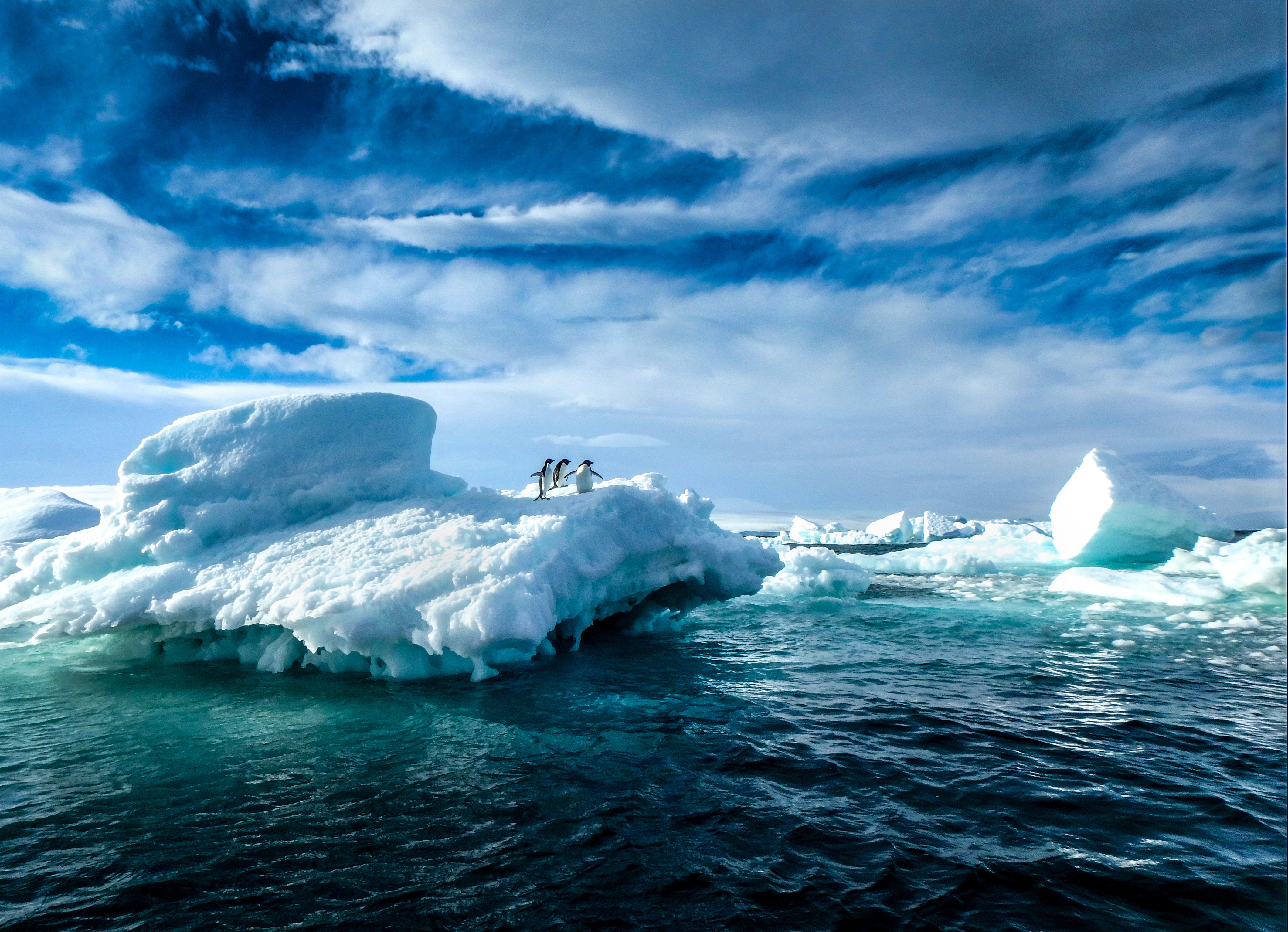 Katrina Zinger's award winning Penguins On Ice Antarctic photograph