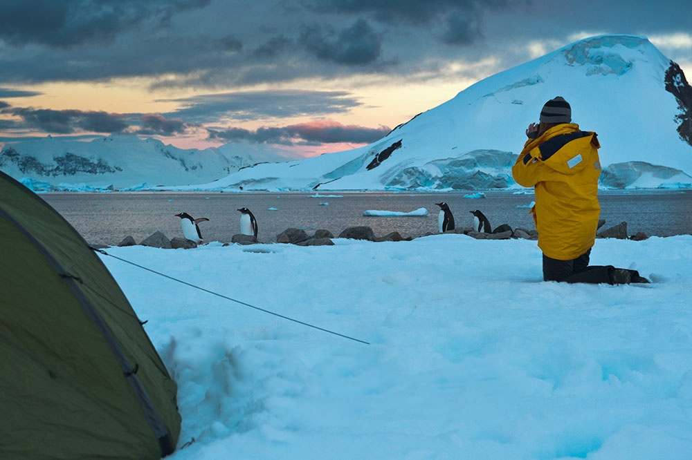 Get up close and personal with unique, inquisitive wildlife in Antarctica.