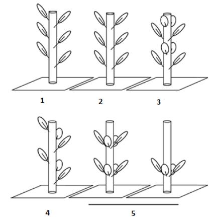 Imagem associada para resolução da questão