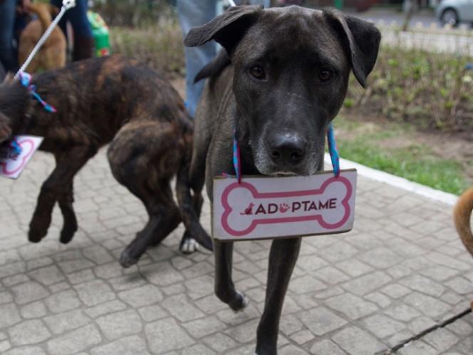 Una Un Parte Juguete De Ser Cachorros Pueden Formar Familia Pasar A FJcTlK1