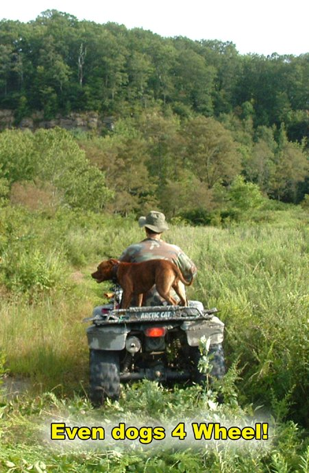 Dogs 4 wheel, too!