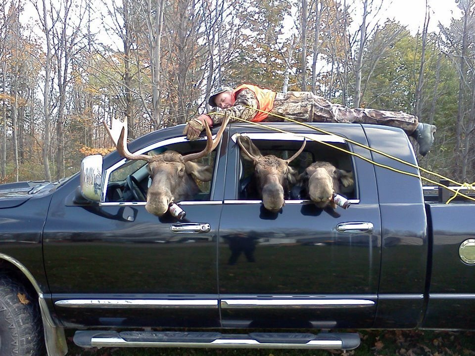 moose hunting gone bad