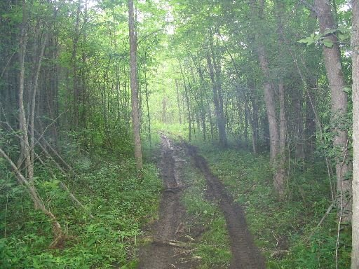 trails on my property in ontario
