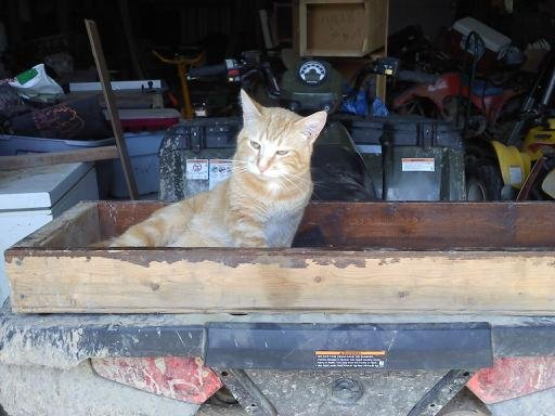 cat and 4wheeler
