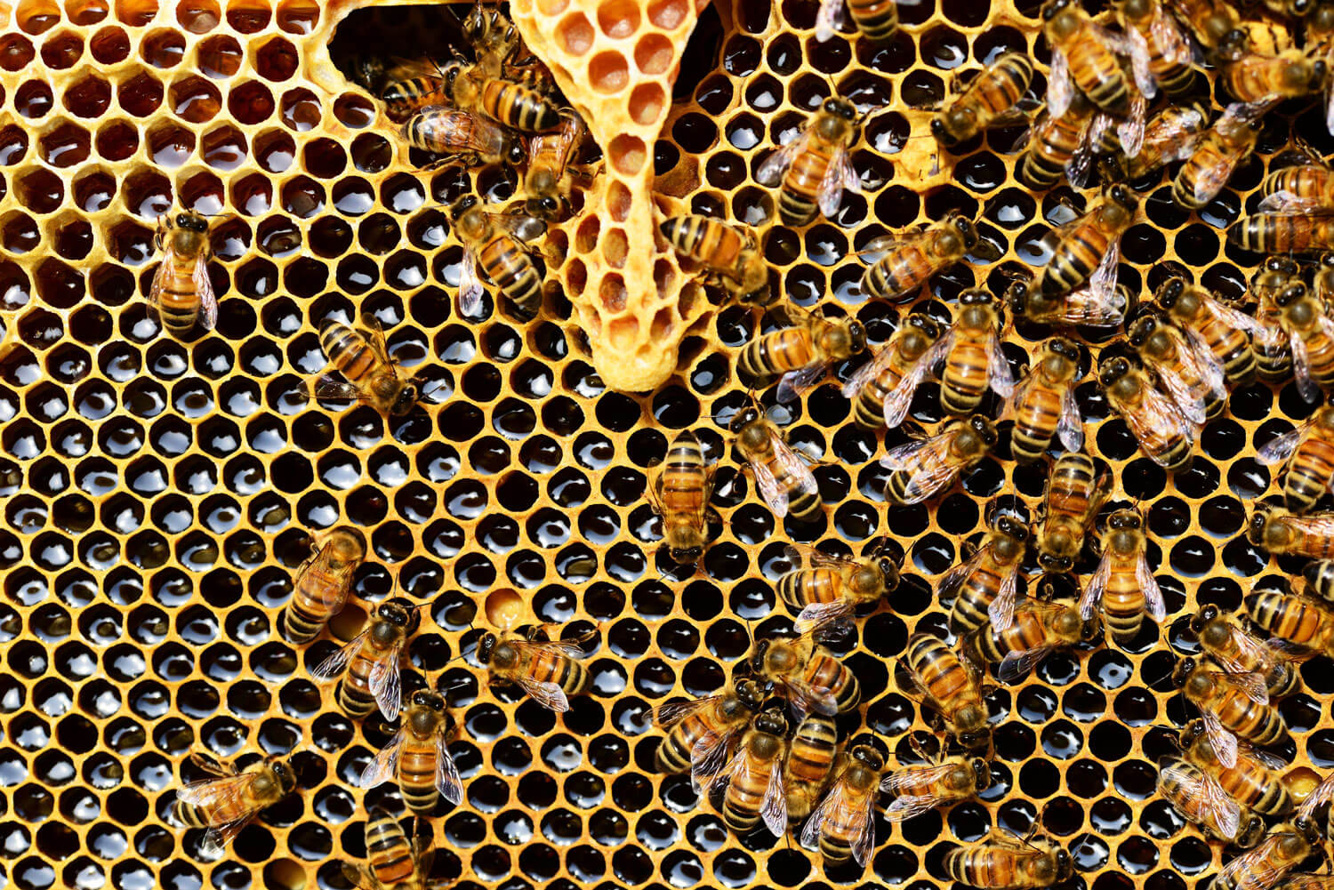Product Failures: How Hive Mentality Could Sting You