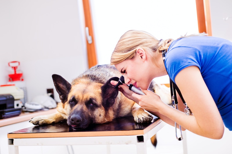 Mobile dog grooming south tampa