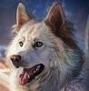Vrghr Dragonwolf