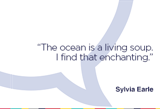 The ocean is a living soup. I find that enchanting.