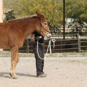 Buying a mule with Steve Edwards