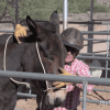 Steve Edwards installing the Come-A-Long Hitch for Halter Training Mules