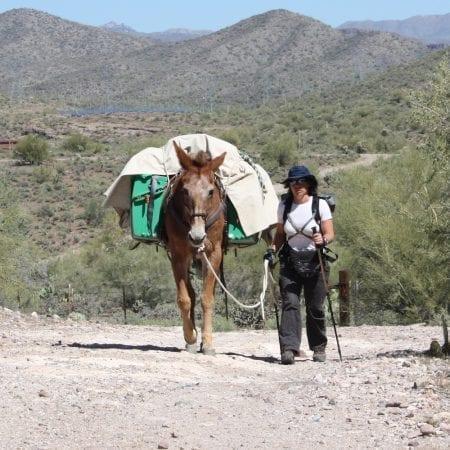 Pack Saddles & Equipment