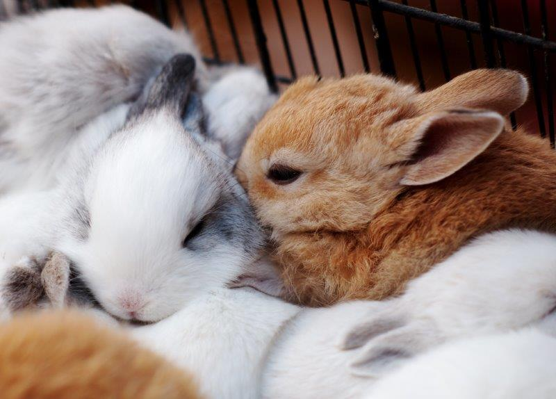 Rabbit live cam