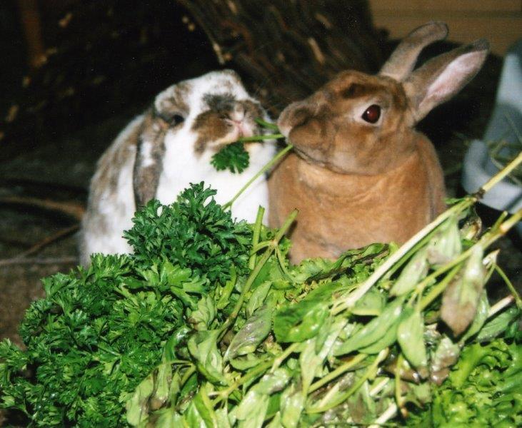 Human Food Bunnies Can Eat