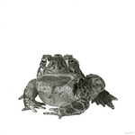 Wyoming_toad_lowres