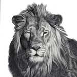 Lion_lowres