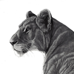 Lioness_lowres