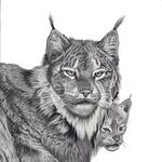 Lynx_lowres