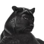 Panther__black_lowres