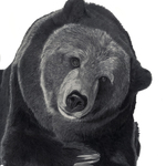 Grizzly_bear_lowres