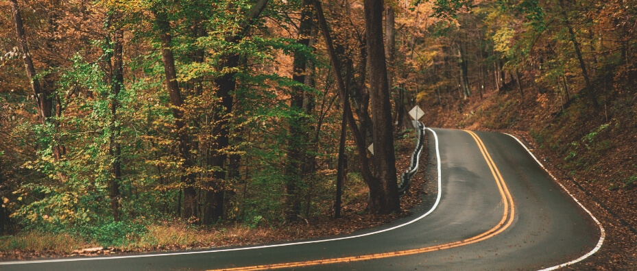 road surrounded by fallen leaves