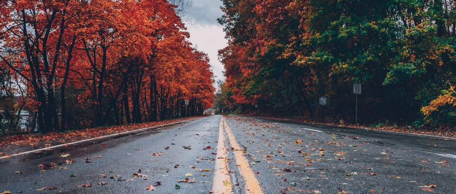 road covered in leaves