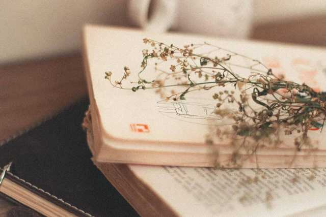 Books I Love: Five Poetry Collections You Should Read