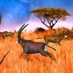 Big Buck Safari Gameplay