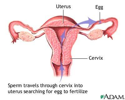 sperm inside vagina Search - XVIDEOSCOM