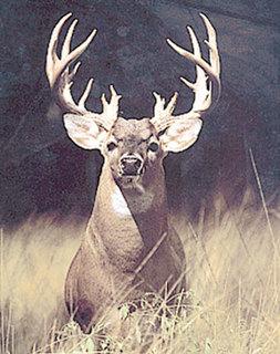 Buck Ass 104