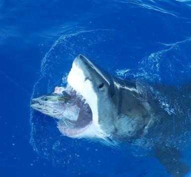 2 chainz mainstream ratchet lyrics genius lyrics for Guadalupe island fishing