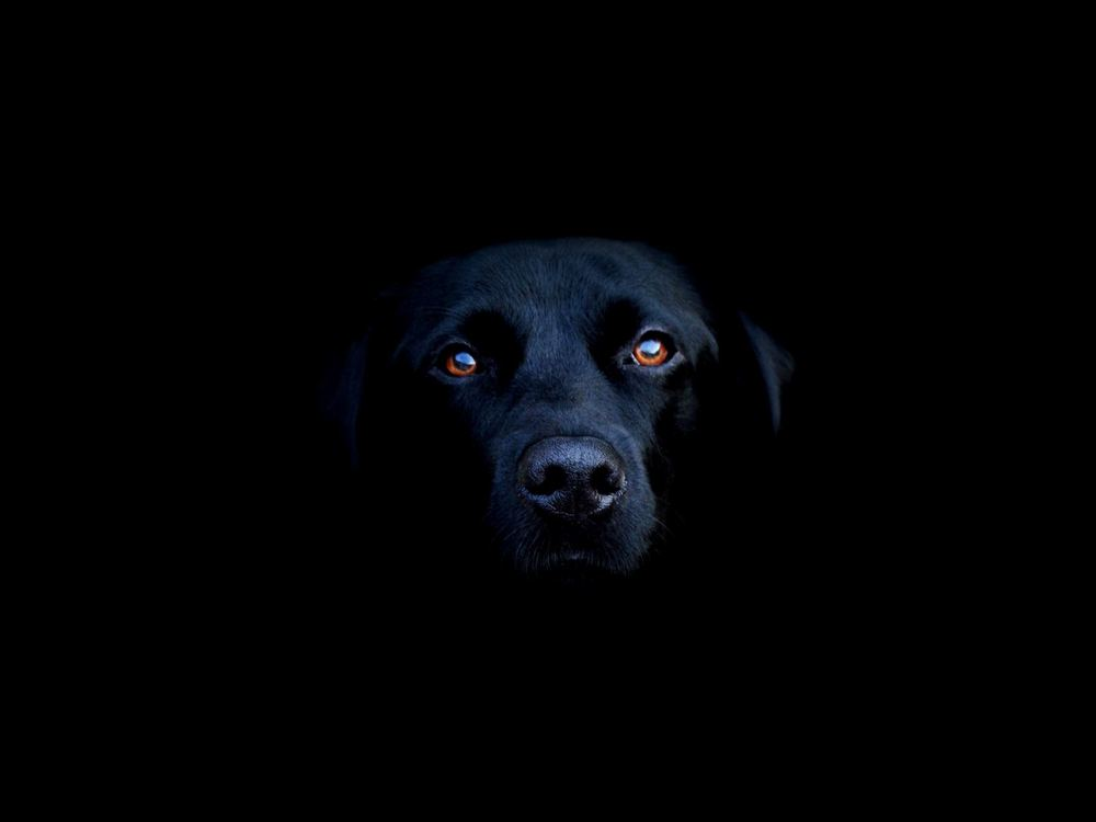 Mad Dog Darkness I'm a Mad Dog Who Sits in The