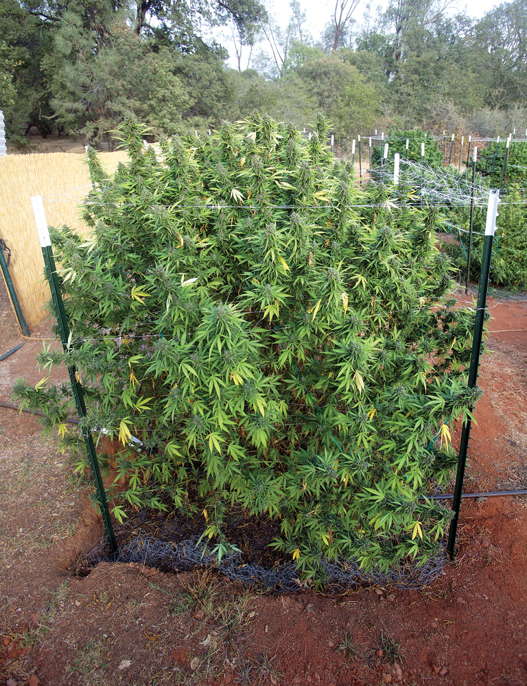 Growing Weed In Your Backyard : Improve the quality of Magic (Remix) Lyrics by leaving a suggestion at