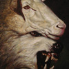 1358289232_75701_wolf%20in%20sheeps%20clothing