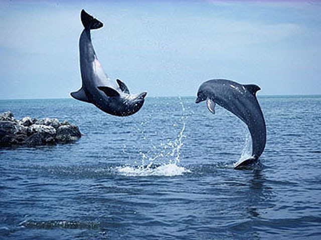 Flip you like a dolphin last emperor lyrics meaning for What does it mean to flip a house