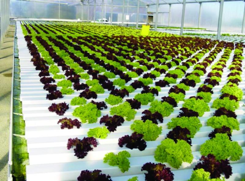 Hook up hydroponics merced