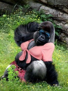 gorilla porn You feel like it is high time for you to watch hairy gorilla videos really striking and  hot but have no idea what kind of porn it might be.
