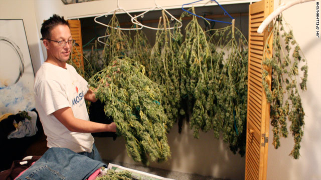 Yes im a ganja planter / Call me di ganja farmer – Ganja ...