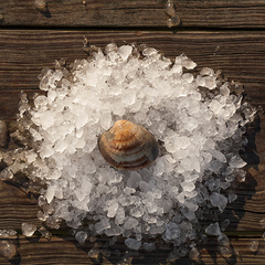 Olde Salt Clams™
