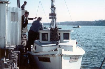 1960   butylo oyster island   01